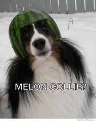 melon-collie
