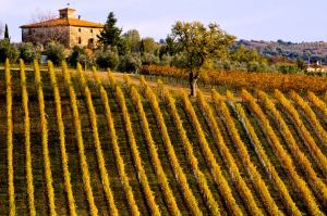 tuscany-vineyard