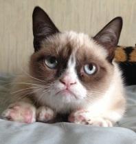 grumpy-cat-03