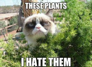 Grumpy-cat-meme-part2-14