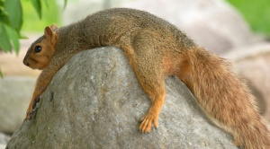 tired-squirrel2