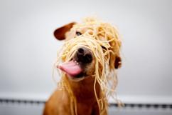 spaghetti_dog